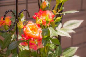 みなのハートクリニック花壇